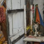Evil-looking cat in Tai O