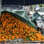 Fruit stalls in Haikou