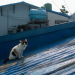 Cat on a Hot Tin Roof in Busan