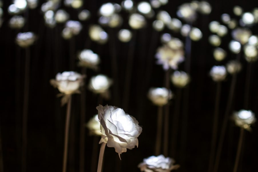 Flower installation at the DDP
