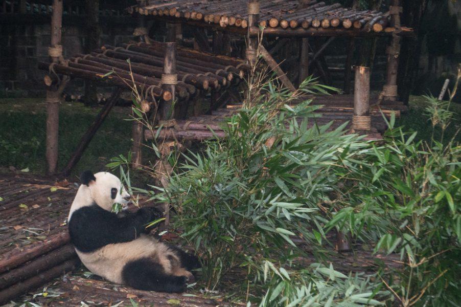 Breakfast at the Chengdu Panda Base