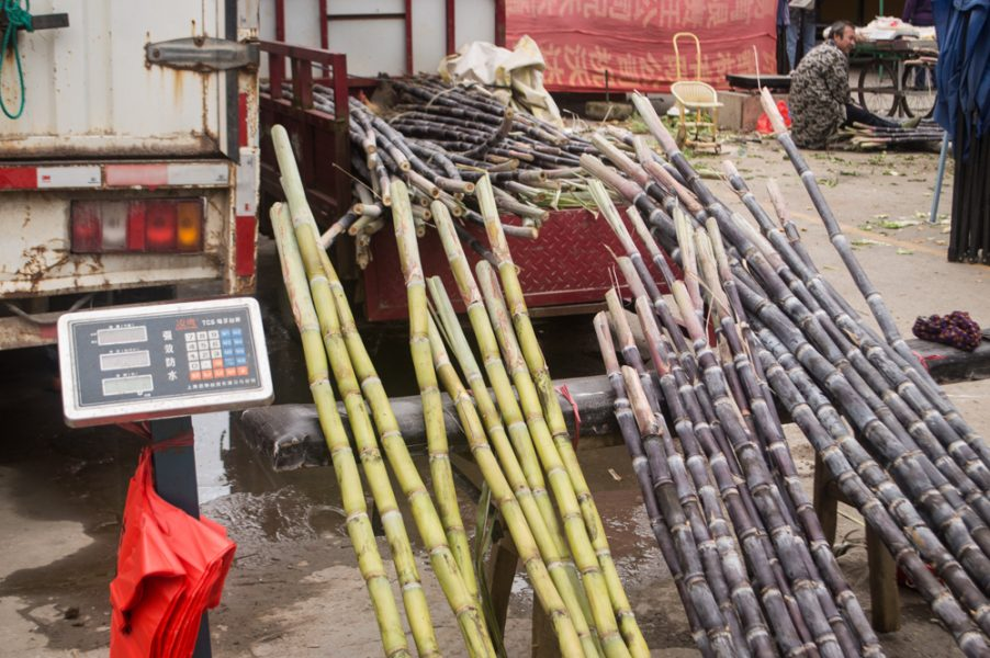 Sugarcane in Xingping